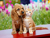 DOK 01 BK0127 01