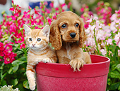 DOK 01 BK0132 01