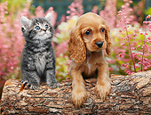 DOK 01 BK0133 01