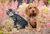 DOK 01 BK0134 01