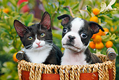 DOK 01 BK0137 01