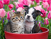DOK 01 BK0138 01