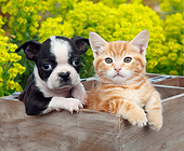 DOK 01 BK0141 01