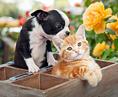 DOK 01 BK0142 01