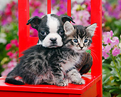 DOK 01 BK0144 01