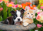 DOK 01 BK0146 01