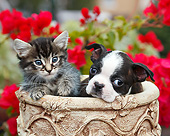 DOK 01 BK0149 01