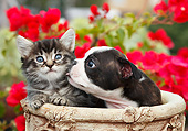DOK 01 BK0150 01