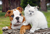 DOK 01 BK0153 01