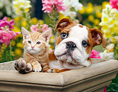 DOK 01 BK0156 01