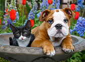 DOK 01 BK0159 01