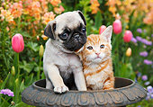 DOK 01 BK0160 01