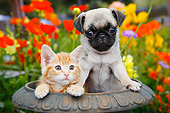 DOK 01 BK0162 01