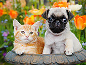 DOK 01 BK0163 01