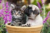 DOK 01 BK0164 01