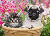 DOK 01 BK0165 01
