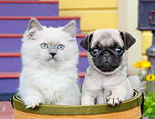 DOK 01 BK0166 01
