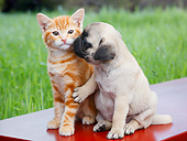 DOK 01 BK0171 01