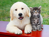 DOK 01 BK0182 01