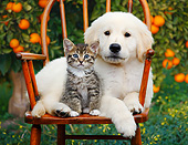 DOK 01 BK0183 01