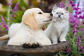 DOK 01 BK0185 01