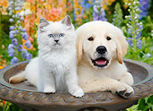 DOK 01 BK0186 01