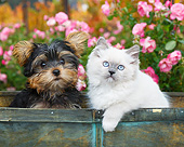 DOK 01 BK0188 01