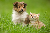DOK 01 JE0001 01