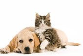 DOK 01 JE0011 01