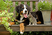 DOK 01 JE0013 01
