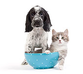 DOK 01 JE0019 01