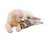 DOK 01 JE0022 01