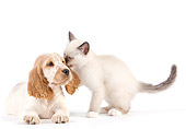 DOK 01 JE0025 01