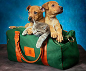 DOK 01 MQ0001 01