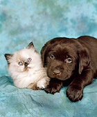 DOK 01 RK0012 01