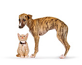 DOK 01 RK0188 03