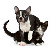 DOK 01 RK0540 01