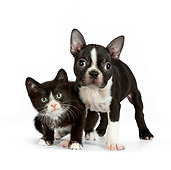 DOK 01 RK0544 01