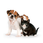 DOK 01 RK0554 01