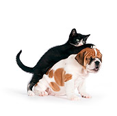 DOK 01 RK0559 01