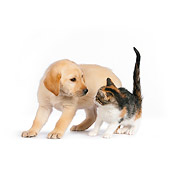 DOK 01 RK0569 01