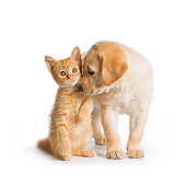 DOK 01 RK0584 01