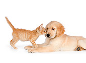 DOK 01 RK0586 01