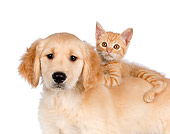 DOK 01 RK0590 01
