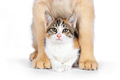 DOK 01 RK0601 01