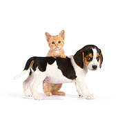 DOK 01 RK0615 01