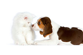 DOK 01 RK0620 01