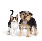 DOK 01 RK0626 01