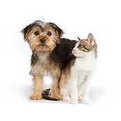 DOK 01 RK0629 01
