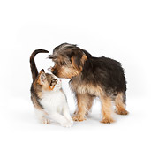 DOK 01 RK0630 01
